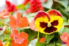 Die schöne Blume stockfotos
