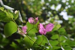 Die schöne Blume Lizenzfreies Stockfoto