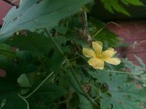 Die schöne Blume stockbilder