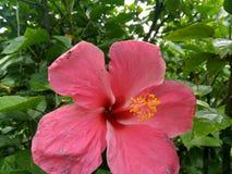 Die schöne Blume lizenzfreie stockbilder