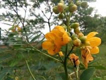 Die schöne Blume lizenzfreie stockfotos