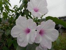 Die schöne Blume der Natur Lizenzfreie Stockbilder