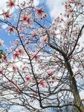 Die schöne Blume diese Blüte im Gipfel lizenzfreie stockfotografie