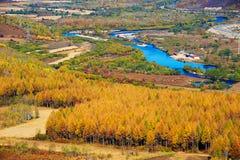 Die schöne Kiefer und Zypresse _autumn Landschaft Stockfoto
