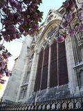 Die schöne Kirschblüte in Frankreich Lizenzfreies Stockbild