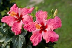 Die schöne rote Blume stockbild