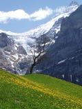 Die schöne Schweiz Stockbild