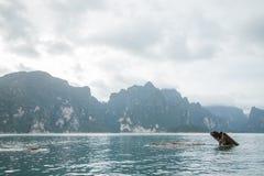 Die schöne Szene von Thailand-Meer Stockbilder