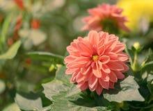 Die schönen Blumen in einem Blumengewächshaus Stockbild