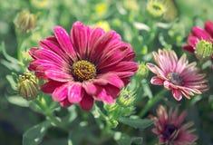 Die schönen Blumen in einem Blumengewächshaus Lizenzfreies Stockbild