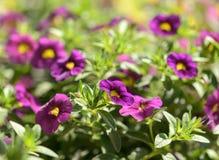 Die schönen Blumen in einem Blumengewächshaus Lizenzfreie Stockfotografie