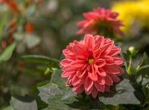 Die schönen Blumen in einem Blumengewächshaus Stockbilder