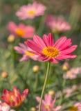 Die schönen Blumen in einem Blumengewächshaus Lizenzfreie Stockbilder