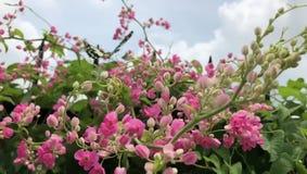 Die schönen Blumen riechen, Schmetterlinge anzuziehen stock footage