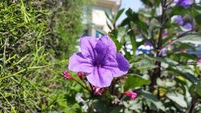 Die schönen Blumen in Zypern Lizenzfreies Stockbild