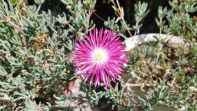 Die schönen Blumen in Zypern Lizenzfreie Stockfotos