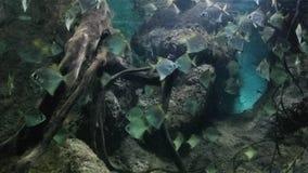 Die schönen Fische in der Welt stockfotografie