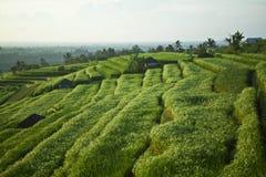 Die schönen Jatiluwih-Reisterrassen in Bali, Indonesien Stockfotografie