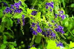 Die schönen purpurroten Blumen lizenzfreies stockbild