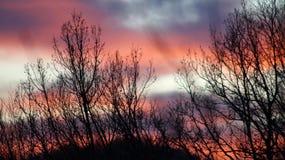 Die schönen purpurroten Töne des Winterhimmels am Abend Stockbilder