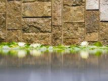Die schönen Seerosen in Getty-Landhaus lizenzfreie stockfotos
