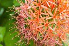 Die Schönheit der Blume Stockfoto
