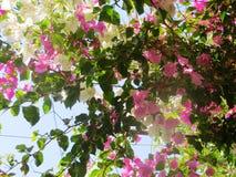 Die Schönheit der Blumenstrauchsommer Juli-Sonne Stockbild