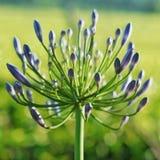 Die Schönheit in der Natur Lizenzfreies Stockfoto
