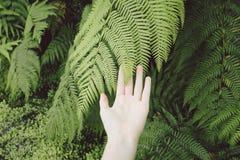 Die Schönheit der Natur Lizenzfreie Stockfotos
