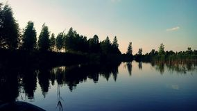Die Schönheit der Natur im Sumpf Lizenzfreie Stockfotos