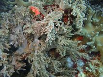 Die Schönheit der Unterwasserwelt in Sabah, Borneo stockfotos