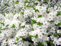 Die Schönheit des Frühlingsblühens Stockbild
