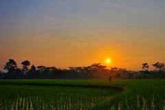Die Schönheit des Sonnenaufgangs auf den Reisgebieten lizenzfreie stockbilder