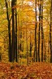 Beautiful colourful Forest in autumn, landscape. Die Schönheit des Waldes an einem schönen Herbsttag, Landschaft royalty free stock photo
