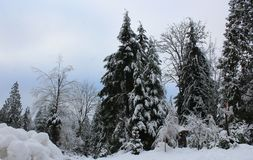 Die Schönheit des Winters lizenzfreie stockfotografie