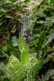 Die Schönheit eines Wasserfalls Stockbilder