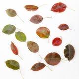 Die Schönheit von Blättern Stockfoto