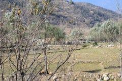 Die Schönheit von Fliegenklatschen KPK Pakistan Stockbild