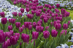 Die Schönheit von Frühlingsblumen Stockbild