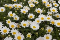 Die Schönheit von Frühlingsblumen Stockfoto