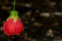 Die Schönheit von Kew-Gärten stockbilder