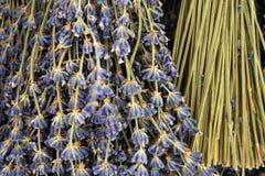 Die Schönheit von Lavendelblumen Lizenzfreies Stockfoto