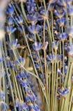 Die Schönheit von Lavendelblumen Lizenzfreies Stockbild