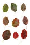 Die Schönheit von leavesl Lizenzfreie Stockfotos