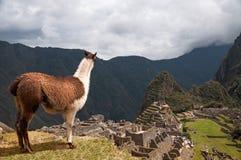 Die Schönheit von Machu Picchu gerade betrachten Stockbilder