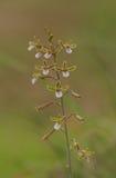 Die Schönheit von Orchideen lizenzfreies stockbild
