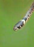 Die Schönheit von Schlangen lizenzfreies stockfoto