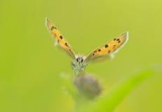 Die Schönheit von Schmetterlingen lizenzfreie stockfotografie