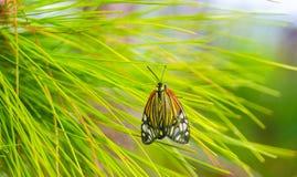 Die Schönheit von Schmetterlingen, die im Waldweichzeichnungsbild leben stockbild