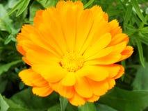 Die schönsten Blumenbilder für Webdesign und Logo Stockbild